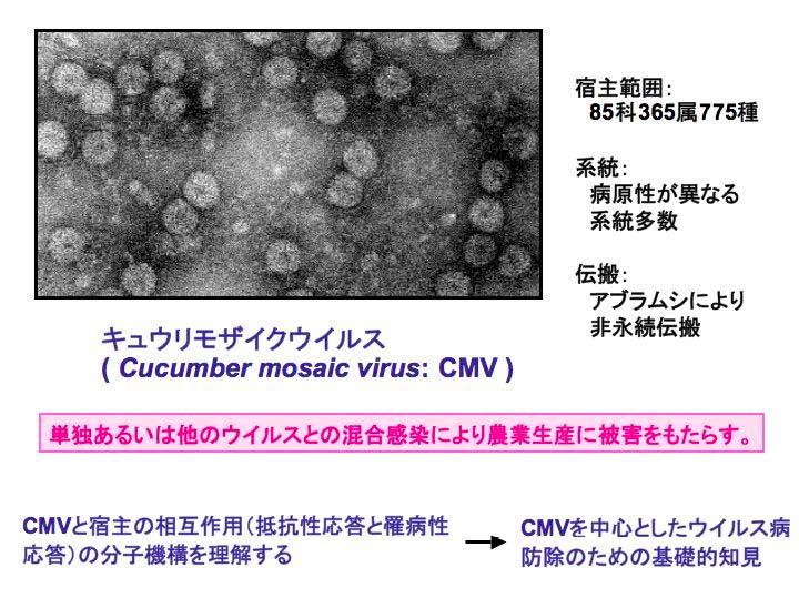 キメラ ウイルス